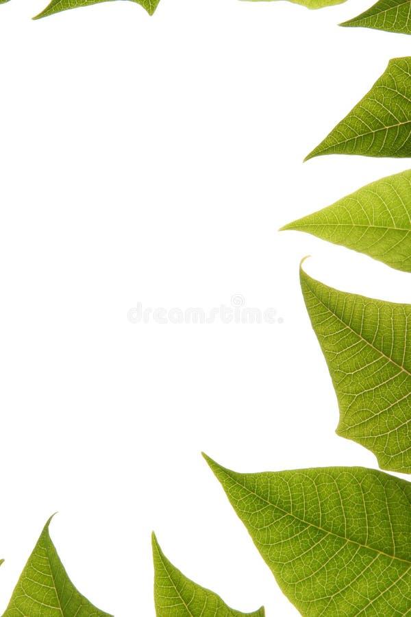 granice tła liście nad white zdjęcia stock