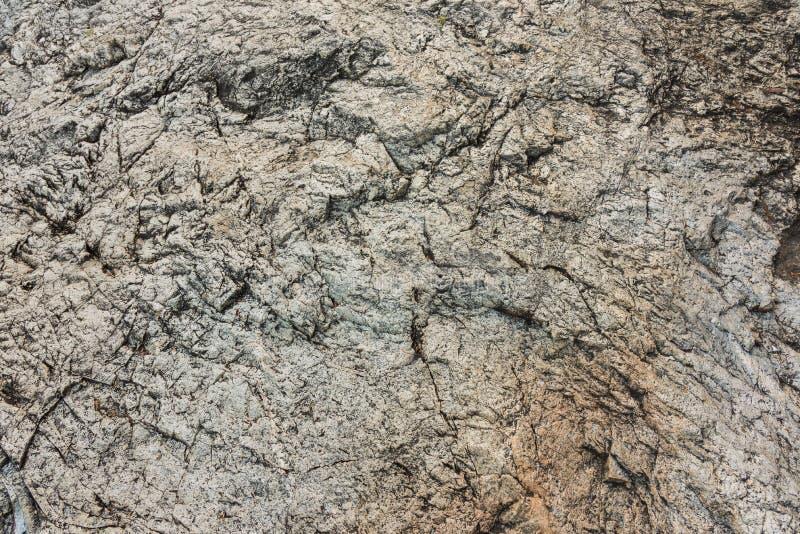 granit vaggar textur med det torra bladet royaltyfria foton