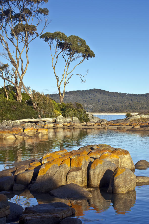 Download Granite And Eucalyptus Trees, Bay Of Fires Stock Image - Image of seaside, binalong: 18390275