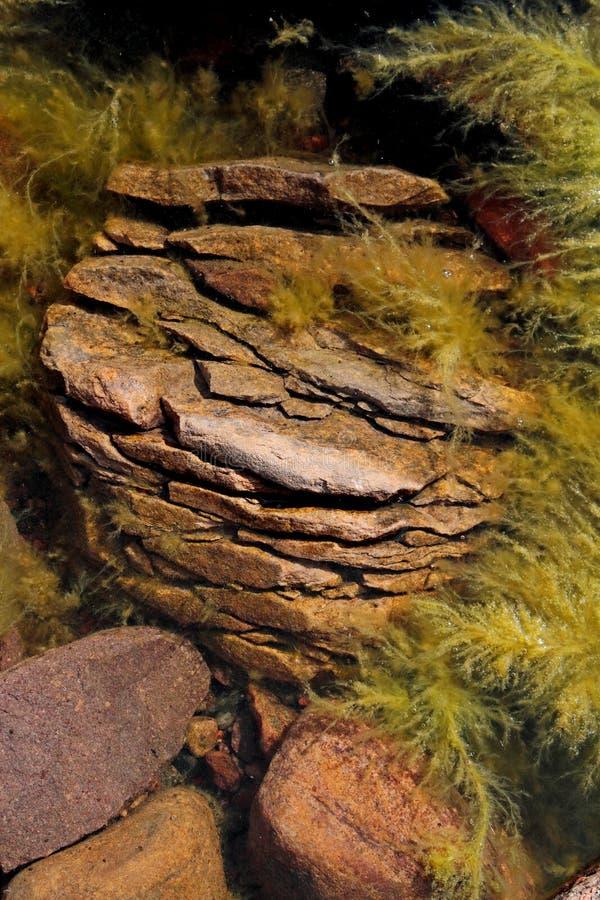 Granitsten med algen på en havskust arkivbild