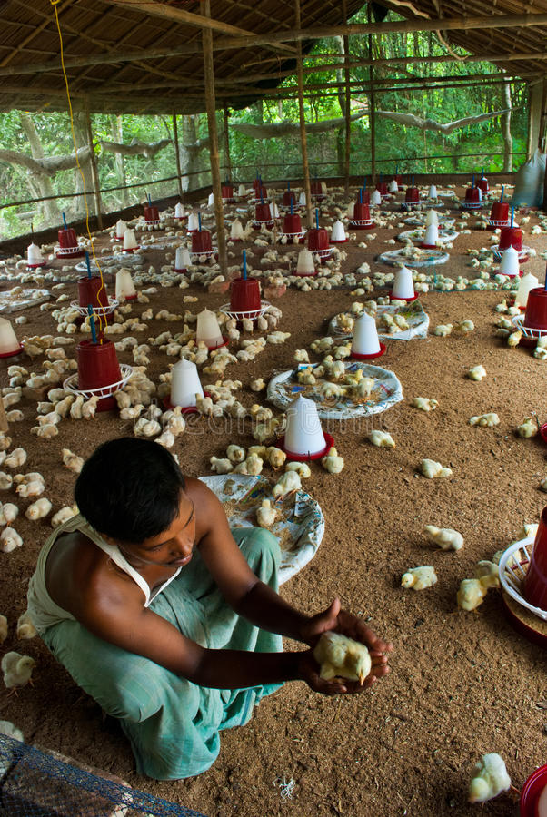 Granja avícola imagen de archivo libre de regalías