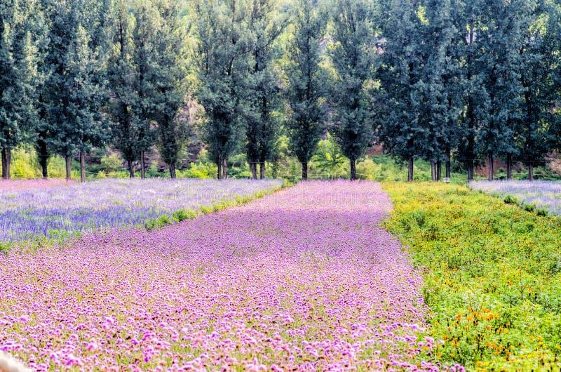 Granja con los céspedes de la flor imagenes de archivo