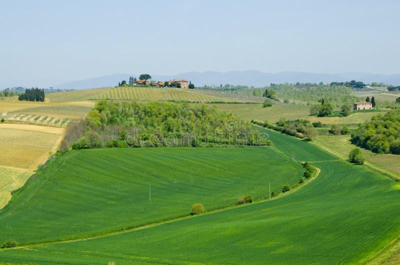 Granja con los viñedos y los campos en Toscana, Italia imagen de archivo