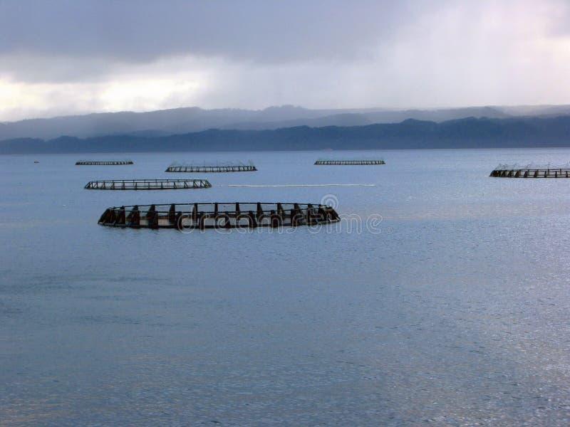 Granja de color salmón 1 del océano foto de archivo libre de regalías