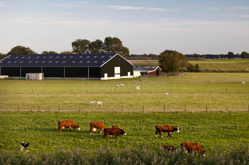 Granja de ganado holandesa encantadora foto de archivo libre de regalías