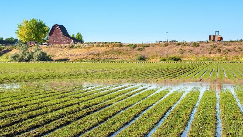 Granja de Idaho con filas de cosechas en un campo fotografía de archivo