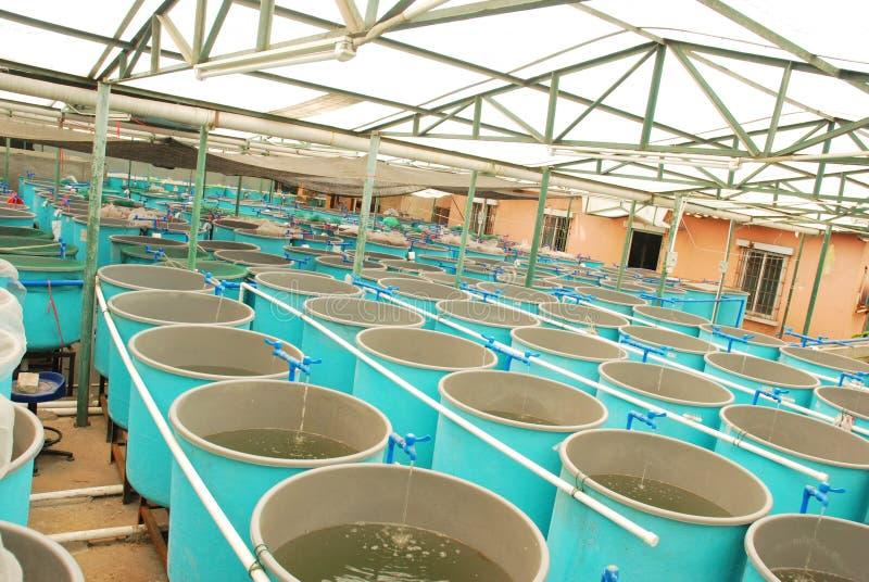Granja de la acuacultura de la agricultura imágenes de archivo libres de regalías