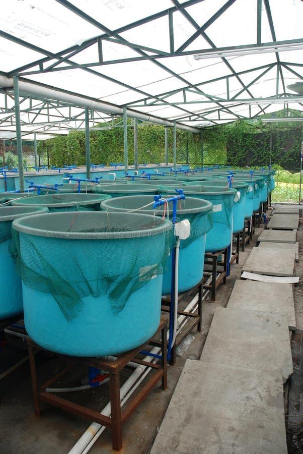 Granja de la acuacultura de la agricultura imagen de archivo