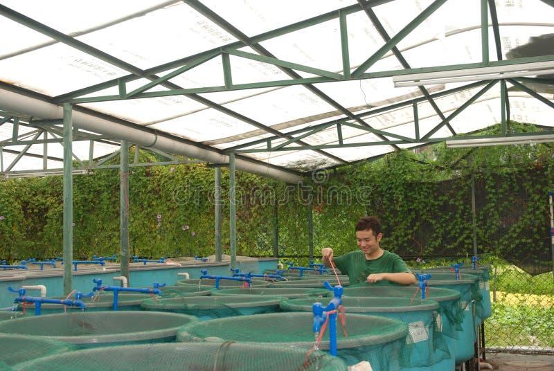 Granja de la acuacultura de la agricultura fotografía de archivo