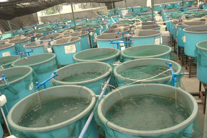 Granja de la acuacultura de la agricultura foto de archivo