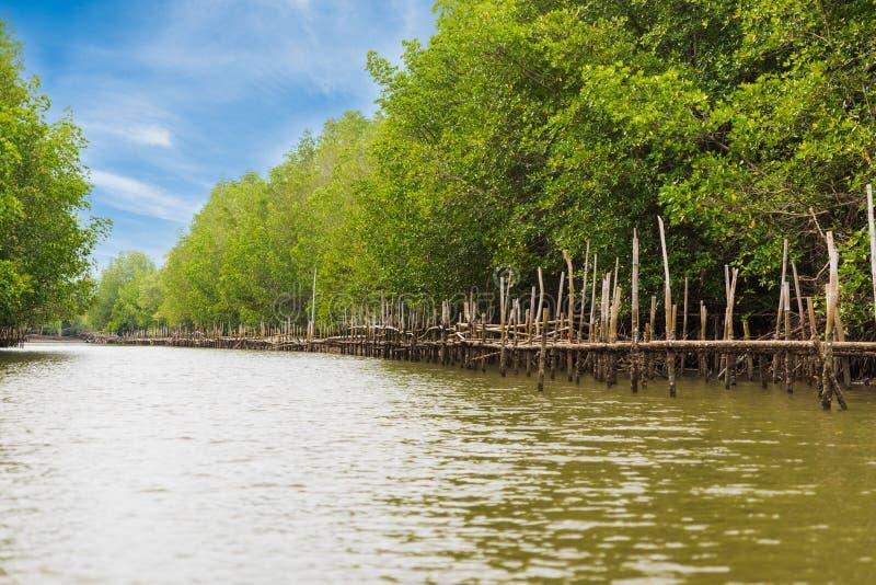 Granja de la ostra en ?rea del bosque del mangle en Chanthaburi, Tailandia Uno de la mejor atracci?n tur?stica de Tailandia imagen de archivo libre de regalías