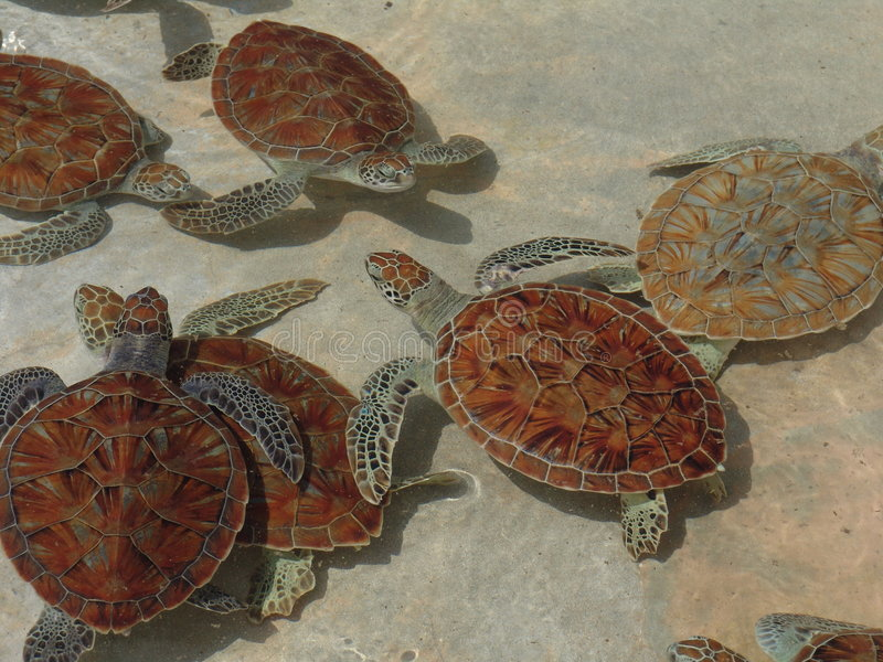 Granja de la tortuga imagen de archivo