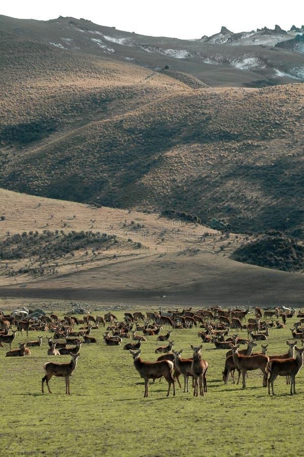 Granja de los ciervos imagen de archivo