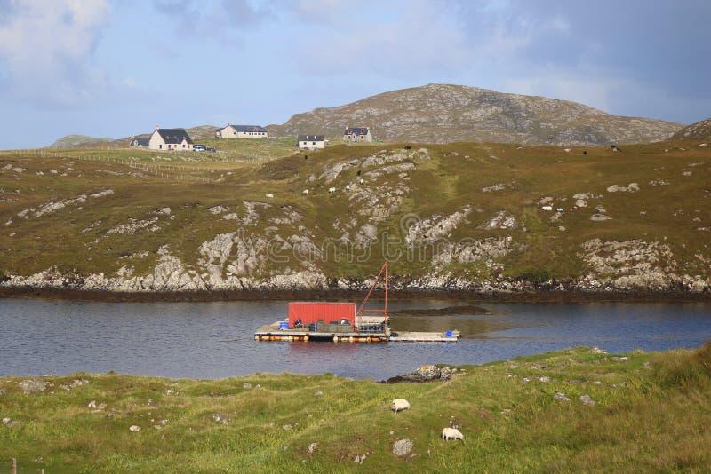 Granja de los crustáceos en balsa en el lago escocés imagen de archivo libre de regalías