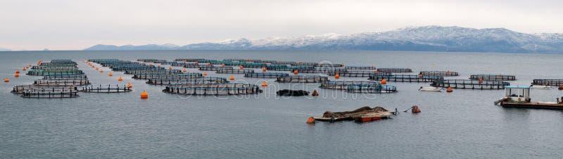 Granja de los mejillones, de los pescados y de los moluscos en de Grecia imagen de archivo libre de regalías
