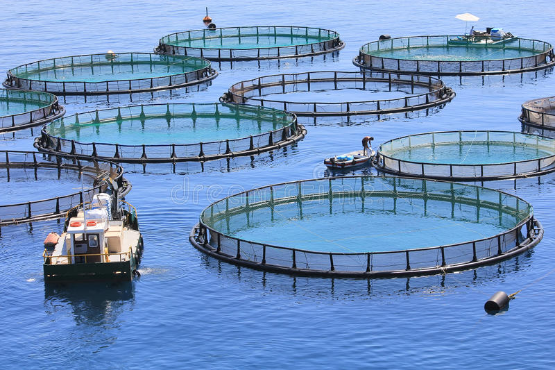 Granja de pescados imagen de archivo libre de regalías