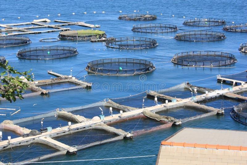 Granja de pescados en el La Spezia Italia fotografía de archivo libre de regalías