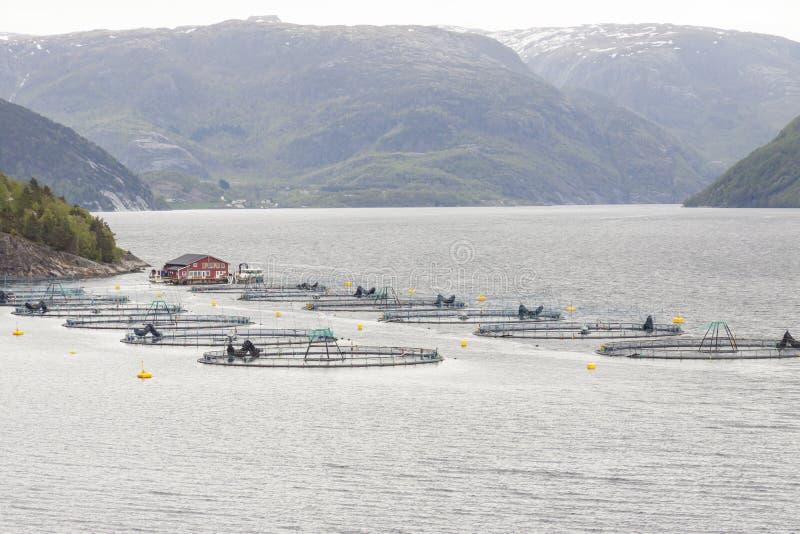 Granja de pescados - Noruega foto de archivo libre de regalías