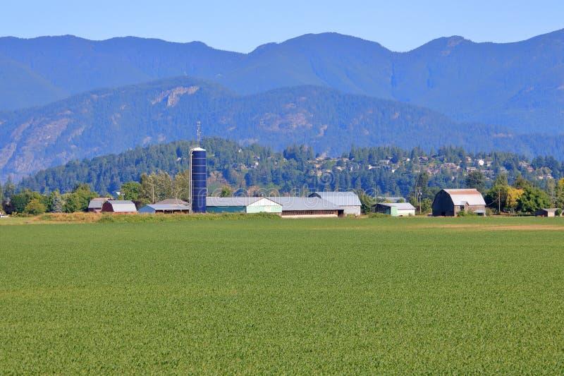 Granja de Silo y campo de maíz temprano cerca de la ciudad imagen de archivo