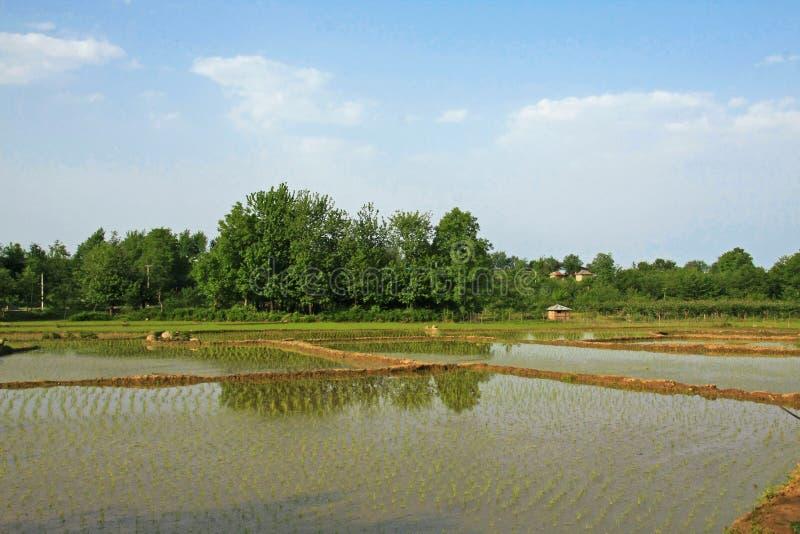Granja del arroz en Guilan imagenes de archivo