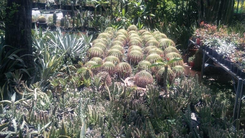 Granja del cactus en Lahore Paquistán fotografía de archivo