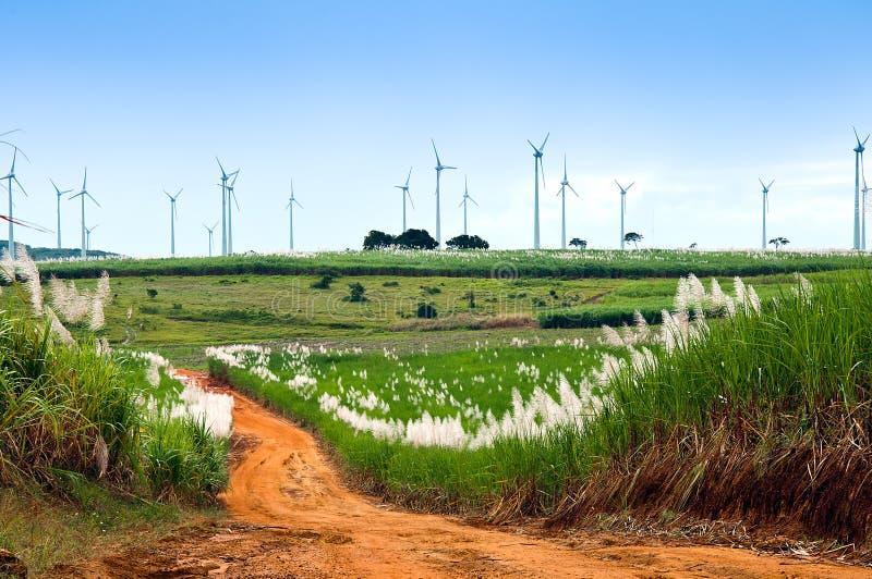 Granja del molino de viento y campos de la caña de azúcar fotos de archivo