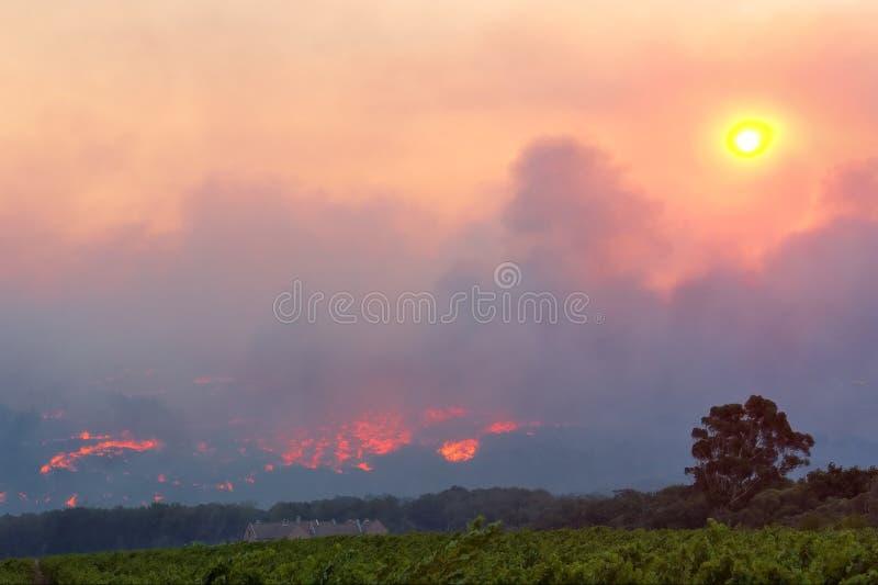 Granja del vino cerca del incendio forestal imagenes de archivo