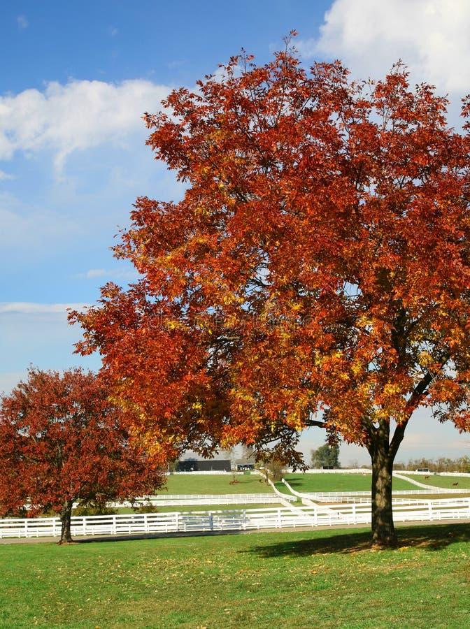 Granja en colores del otoño imagen de archivo