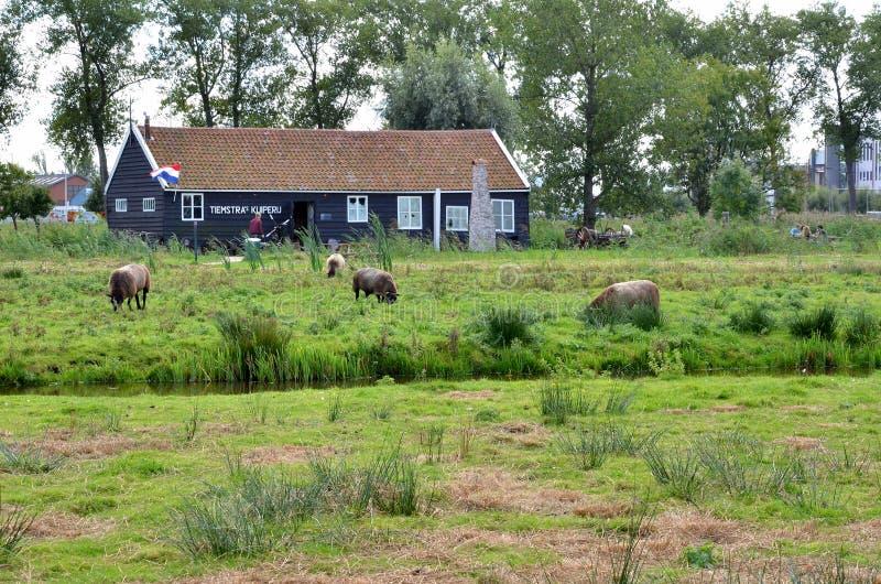Granja en Países Bajos fotos de archivo