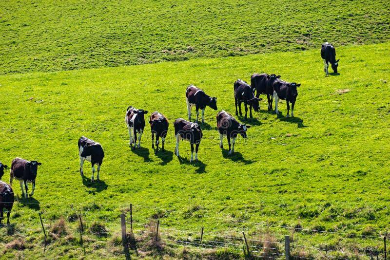 Granja lechera en alguna parte en Nueva Zelanda imagen de archivo