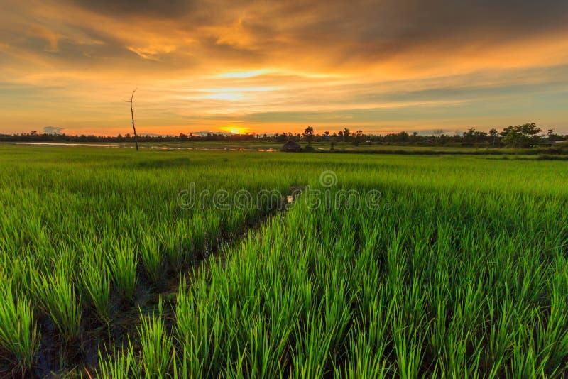 Granja tailandesa imagen de archivo