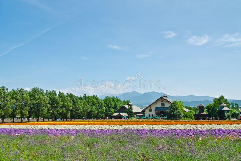 Granja Tomita, Furano, Hokkaido, Japón foto de archivo libre de regalías