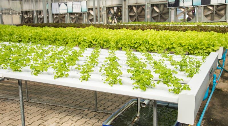Granja vegetal hidropónica orgánica del cultivo, hydrop del cultivo imagen de archivo libre de regalías