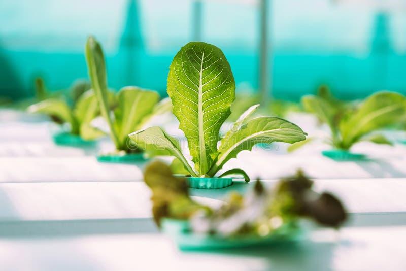 Granja vegetal verde del hidrocultivo fotografía de archivo libre de regalías