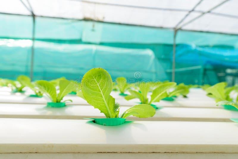 Granja vegetal verde del hidrocultivo fotos de archivo