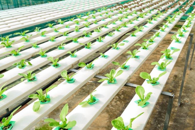 Granja vegetal verde del hidrocultivo fotos de archivo libres de regalías