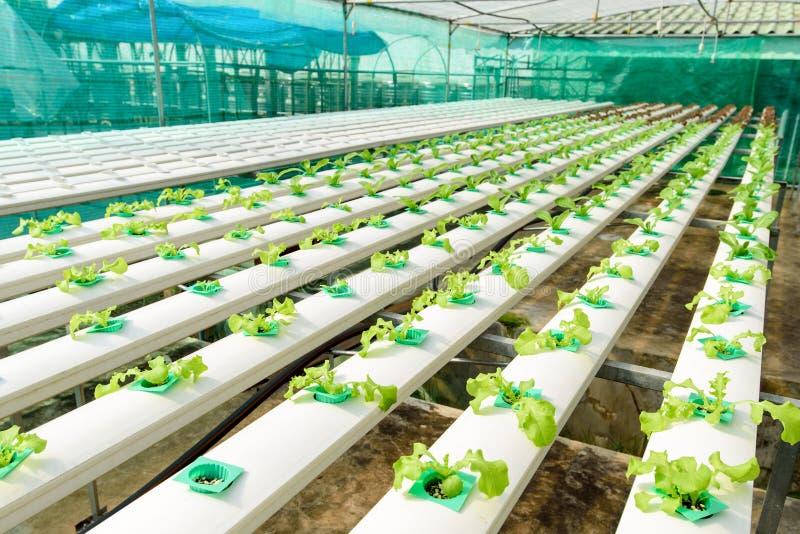 Granja vegetal verde del hidrocultivo foto de archivo libre de regalías
