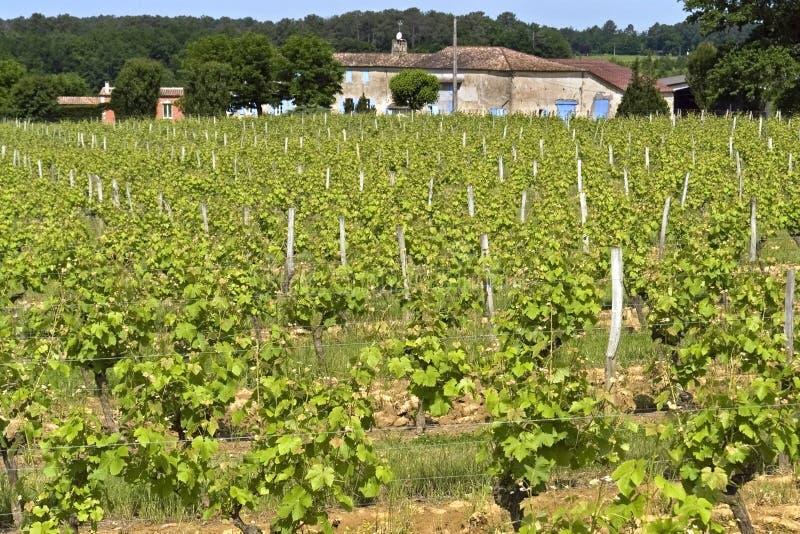 Granja y viñedo en paisaje rural, Francia del vino imagen de archivo libre de regalías