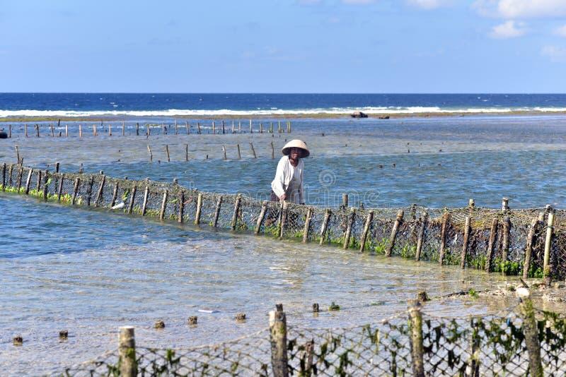 Granjas de la alga marina en Nusa Penida Isaland imagen de archivo libre de regalías