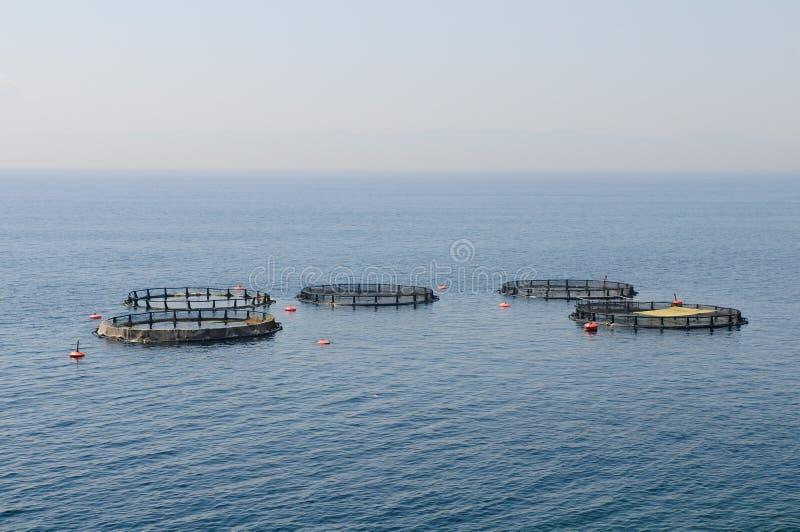 Granjas de pescados foto de archivo libre de regalías