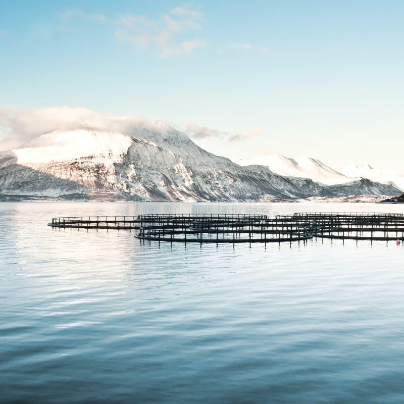 Granjas de pescados en Noruega septentrional fotos de archivo