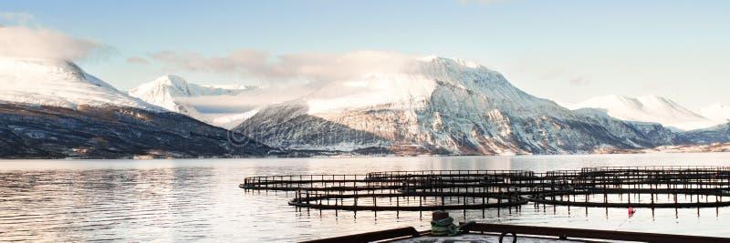Granjas de pescados en Noruega septentrional fotografía de archivo
