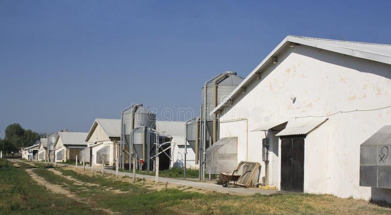 Granjas y silos de pollo imagen de archivo libre de regalías