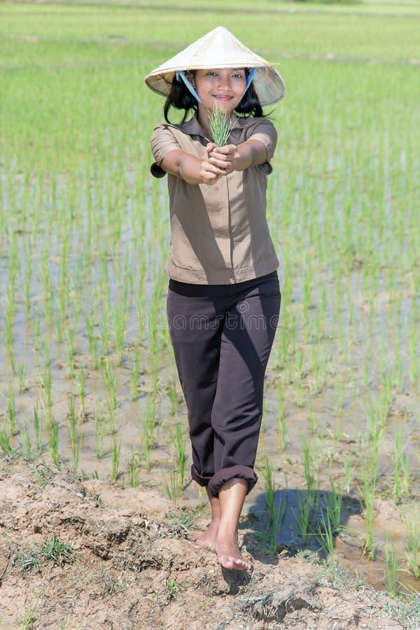 Granjero asiático en el campo del arroz fotografía de archivo libre de regalías