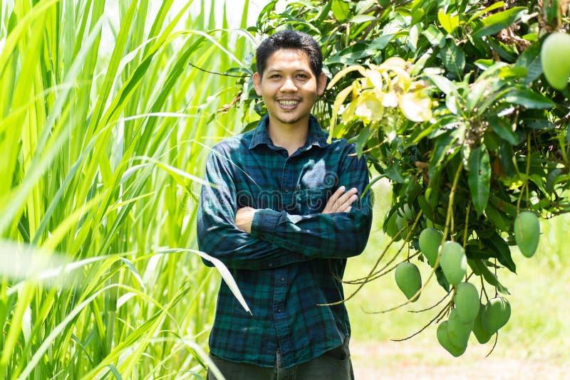 Granjero asiático joven que se coloca en granja orgánica del mango imagenes de archivo