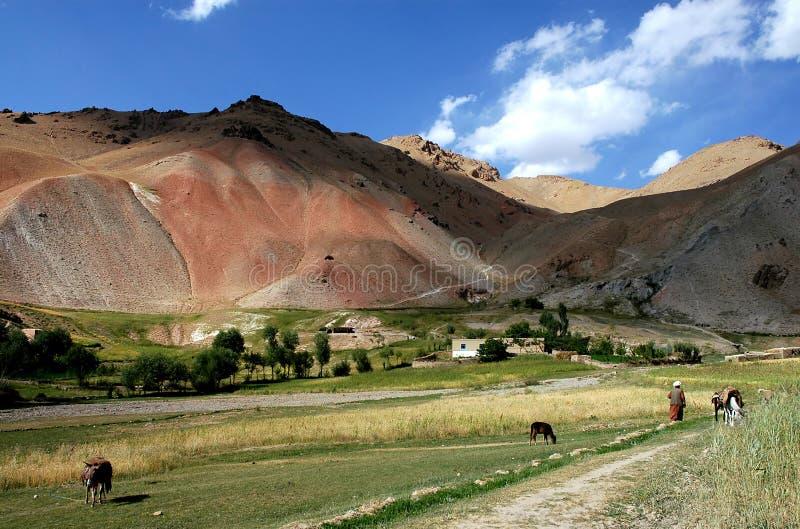 Granjero con animales en un pequeño pueblo entre Chaghcharan y el Minaret de la mermelada en Afganistán imágenes de archivo libres de regalías