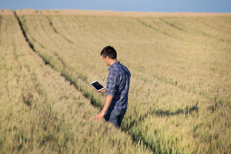 Granjero con la tableta en campo foto de archivo libre de regalías