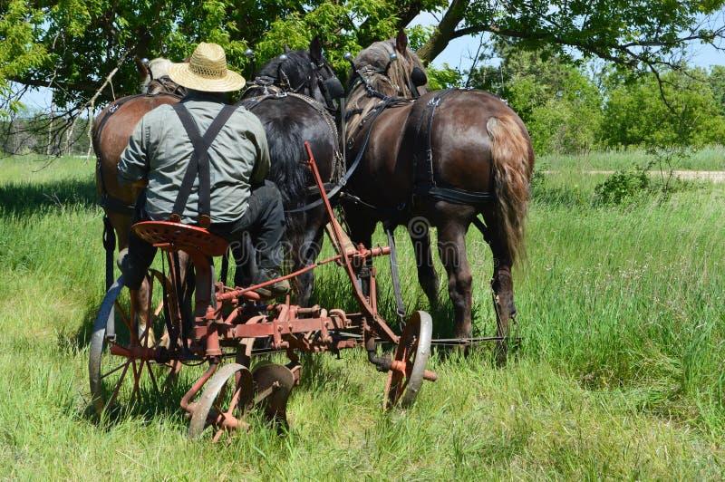 Granjero con los caballos imagenes de archivo