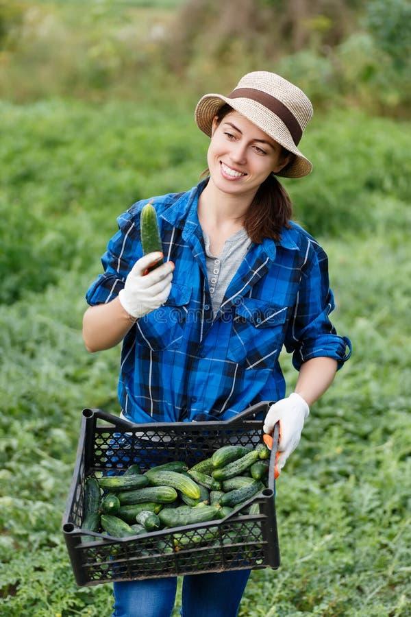 Granjero de la mujer con la caja de pepinos cosechados imagen de archivo