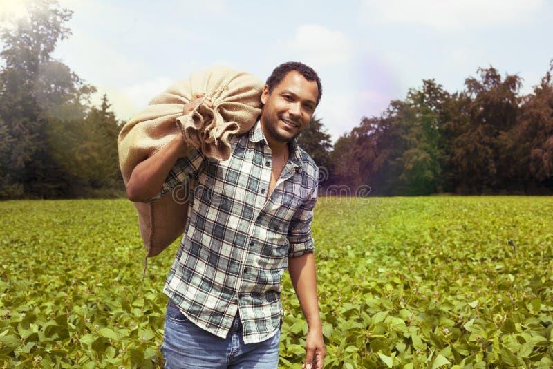 Granjero de la patata en la plantación de la patata fotografía de archivo libre de regalías